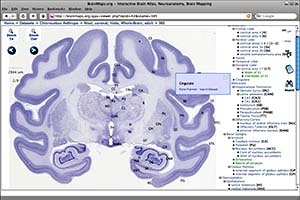 Brain Maps AJAX viewer